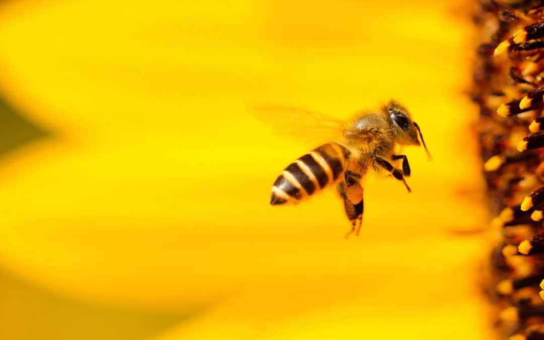 """Vortrag beim NABU """"Die Biene, eines der wichtigsten Nutztiere in unserer Natur, ist zunehmend bedroht"""""""