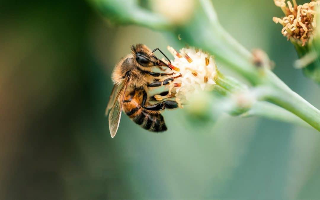 NABU bietet Vortrag über Wespen und Hornissen