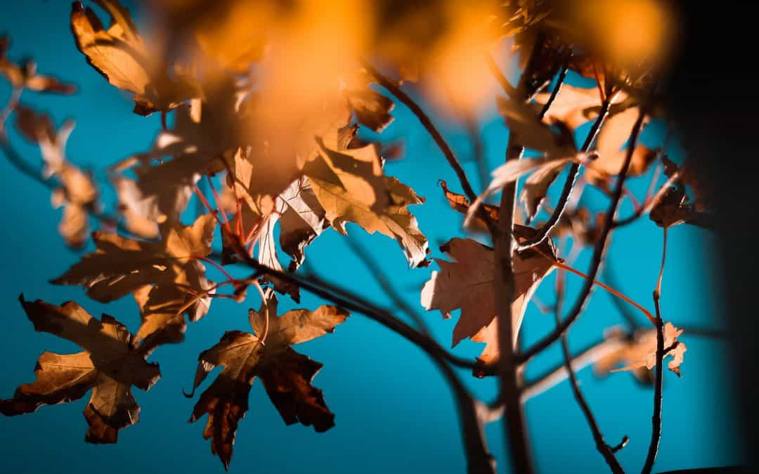 Ratsschule und Grundschule Osterberg erkunden mit dem NABU die Blätterwelt