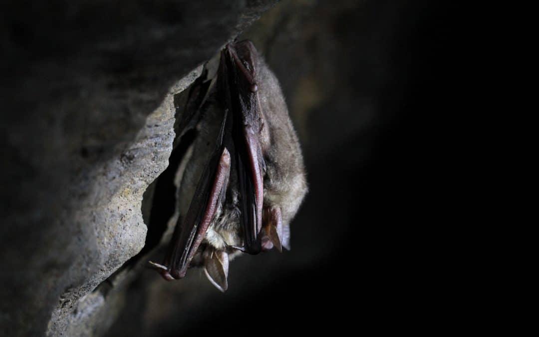 Vortrag: Winterwelt der Fledermäuse am 21.11.2019
